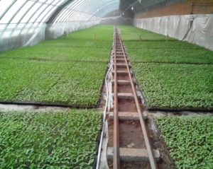 Industrial nursery can prevent farmers from producing plantlets by themselves
